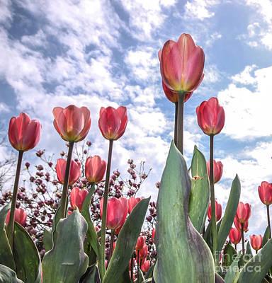 Blue Photograph - Granny's Tulips by Nancy Harrison