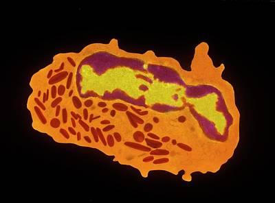 Granulocyte White Blood Cell Print by Cnri