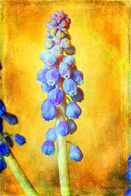 Purple Grapes Mixed Media - Grape Hyacinth by Bellesouth Studio