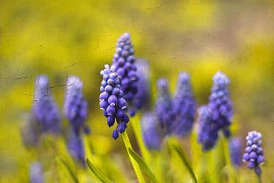 Grow Digital Art - Grape Hyacinth by Jessica Jenney