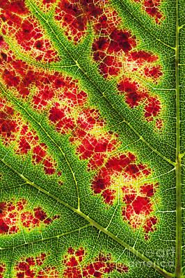 Nero Photograph - Grape Leaf Pattern by Tim Gainey