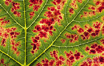 Grape Leaf Texture Print by Tim Gainey