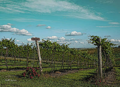 Grape Vines Print by Jeff Swanson