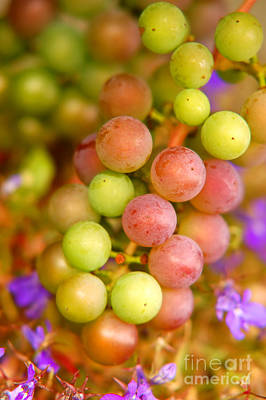 Eating Photograph - Grapes Background by Michal Bednarek