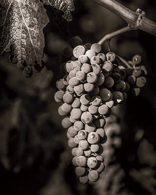 Photograph - Grapes In Grey 4 by Clint Brewer