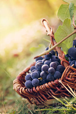 Vino Photograph - Grapes by Mythja  Photography