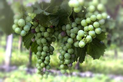 Grapes On A Vine Print by Georgia Fowler