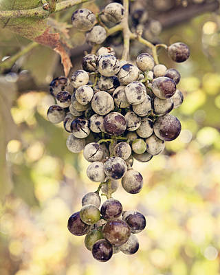 Bunch Of Grapes Photograph - Grapes On The Vine by Angela Bonilla