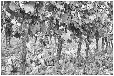 Grapes On The Vine Print by Georgia Fowler
