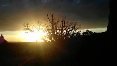 Desert Photograph - Grasping For Sunlight by Ashley Keegan