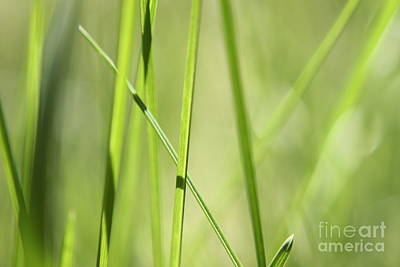 Grass Abstract - Woodie- Green 01 Print by Variance Collections