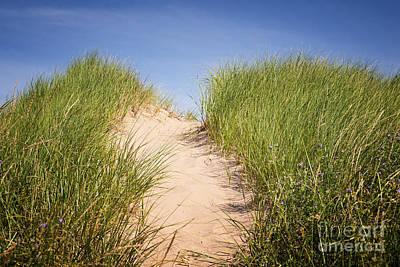 Grass On Sand Dunes Print by Elena Elisseeva