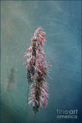 Liz Alderdice Photograph - Grasses - Art By Nature by Liz  Alderdice