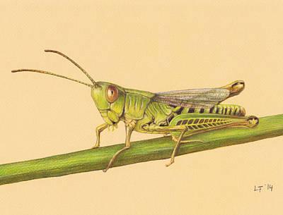 Grasshopper Drawing - Grasshopper by Lars Furtwaengler