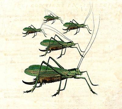 Grasshopper Digital Art - Grasshopper Parade 2 by Antique Images