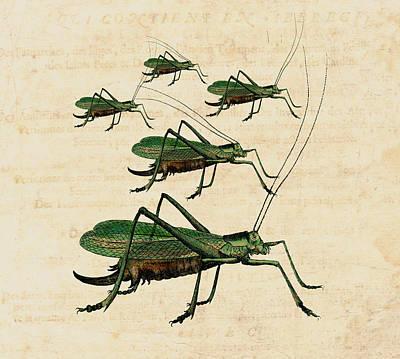 Grasshopper Digital Art - Grasshopper Parade by Antique Images