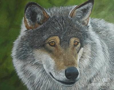 Wolf Face Painting - Gray Wolf by Sid Ball