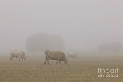 Alberta Prairie Landscape Photograph - Grazing by Dan Jurak