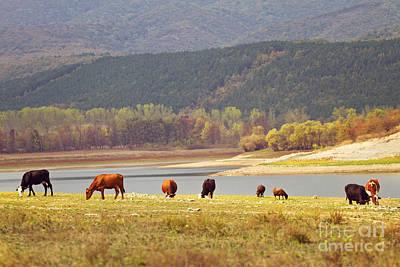 Livestock Photograph - Grazing by Diana Kraleva
