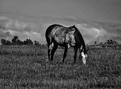 Solebury Photograph - Grazing by Greg Kear