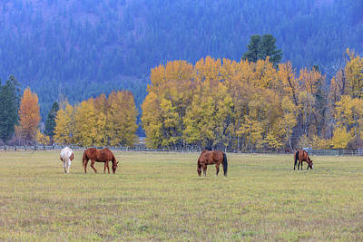 Winthrop Photograph - Grazing Horses Winthrop Western by Tom Norring