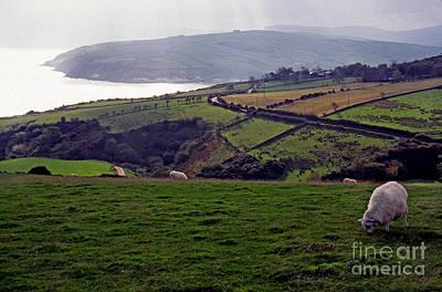 Grazing Sheep County Antrim Northern Ireland Print by Thomas R Fletcher