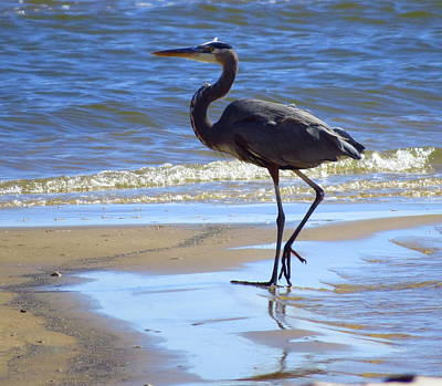 Great Blue And Beach Print by Phyllis Beiser