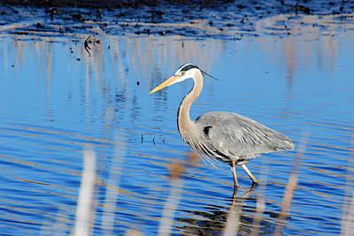 Great Blue Heron Original by Crystal Wightman