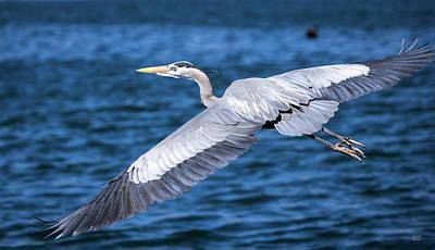 Heron Photograph - Great Blue Heron Flight by David Millenheft