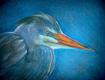 Blue And Grey Drawing - Great Blue Heron by Linda Nielsen