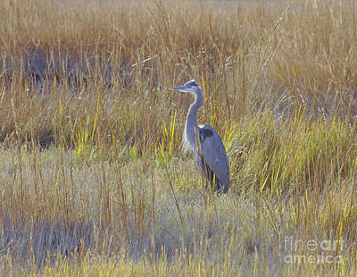 Green Painting - Great Blue Heron Standing Tall by Cindy Lee Longhini