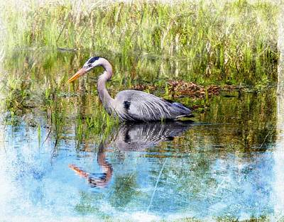 Digital Painting - Great Blue Hunter by Barbara Chichester
