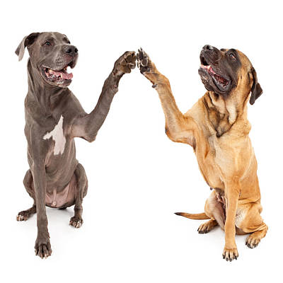 Great Dane And Mastiff Dogs Shaking Hands Print by Susan  Schmitz