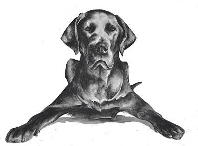 Black Lab Watercolor Painting - Great Dane by Jennifer Stefani