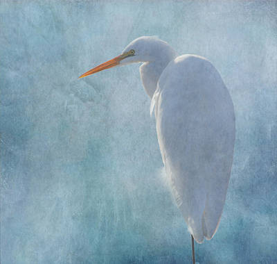 Great Egret 2 Print by Angie Vogel
