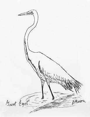 Egret Drawing - Great Egret by Becky Mason
