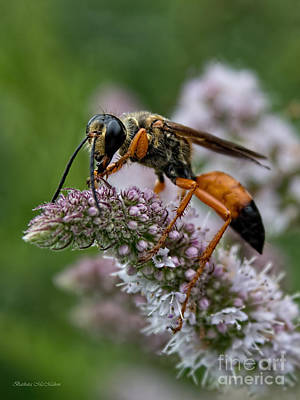 Nature Photograph - Great Golden Digger Wasp by Barbara McMahon