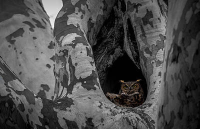 Photograph - Great Horned Owl by Jahred Allen