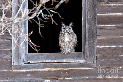 Us Fauna Photograph - Great Horned Owl by Jim Zipp
