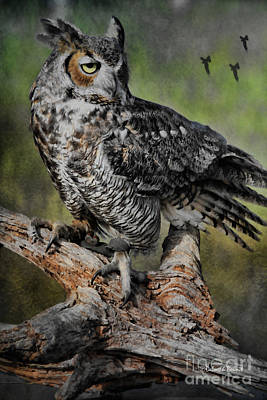 Great Horned Owl On Branch Print by Deborah Benoit