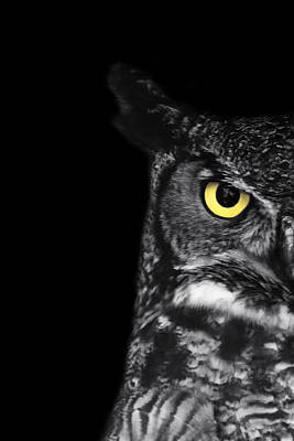 Black And White Bird Photograph - Great Horned Owl Photo by Stephanie McDowell