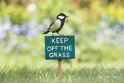 Great Tit On A Keep Off The Grass Sign Print by Tim Gainey