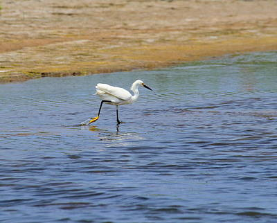 Bird Photograph - Great White Egret 28 by Cathy Lindsey