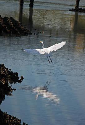 Great White Egret - In Flight Original by Suzanne Gaff