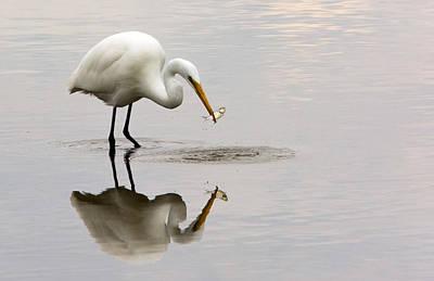 Great White Egret Print by Linda Shannon Morgan