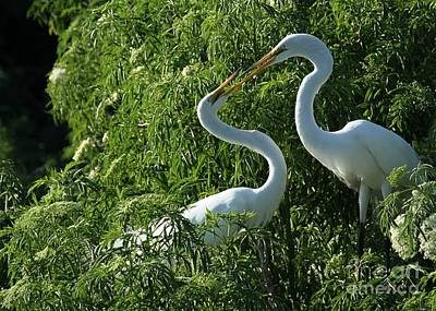 Egret Photograph - Great White Egret Lovers by Sabrina L Ryan