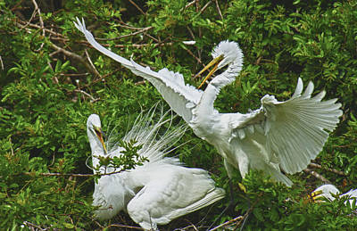 Photograph - Great White Egret by Patty MacInnis