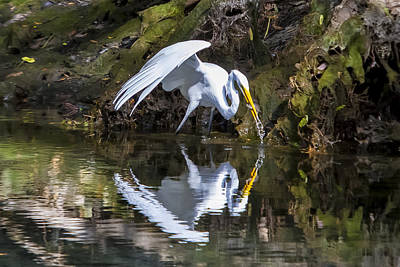 Photograph - Great White Heron Fishing by Charles Warren