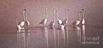 Biologic Photograph - Greater Flamingos by Heiko Koehrer-Wagner