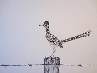 Roadrunner Drawing - Greater Texas Roadrunner by Currie Smith